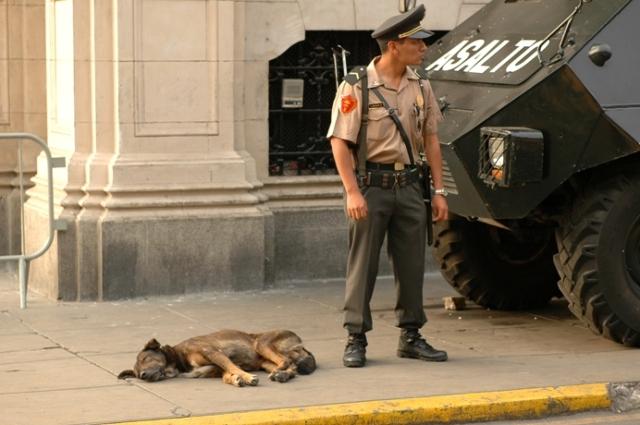 lima-guard-dog